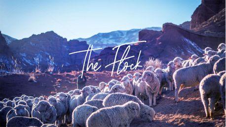 The Flock (84300)