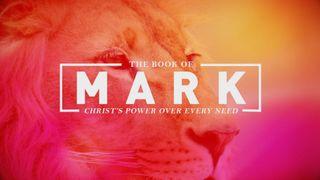 Mark Stills