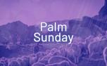 Shepherd Palm Sunday (87076)