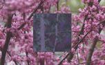 Spring Trees (Square) (87153)
