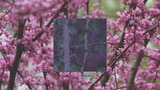 Spring Trees (Square)