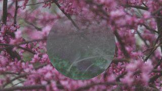Spring Tree (Circle)