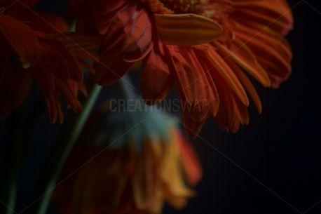 Orange Flower (87903)