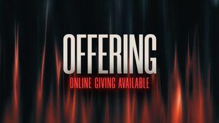 Quinn (Offering)