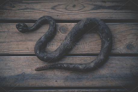The Snake (89466)