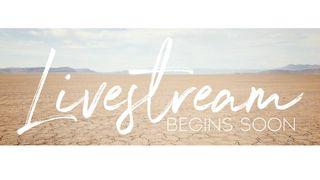 Desert : Livestream