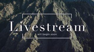 Slate Cliff : Livestream