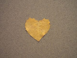 Yellow Heart Shaped Leaf