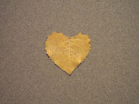 Yellow Heart Shaped Leaf (90034)