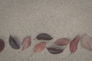 Fall Leaves On Cement