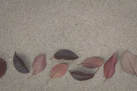 Fall Leaves On Cement (90236)