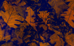 Fall Motion Background (90583)