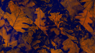 Fall Motion Background