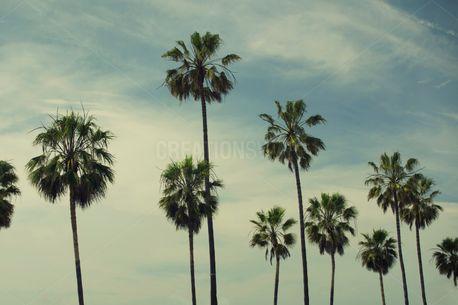 Palm Tree Paradise (91057)