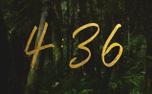 ForestGold_Countdown (91174)