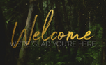 ForestGold_Welcome (91175)
