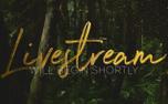 ForestGold_Livestream (91176)