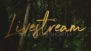 ForestGold_Livestream