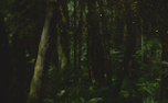 ForestGold : Motion Loop 1 (91180)
