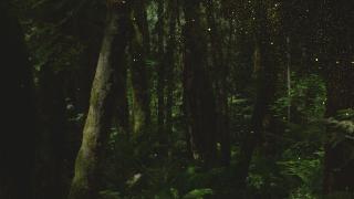 ForestGold_Loop 1