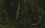 ForestGold : Motion Loop 2 (91181)