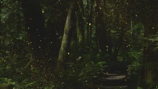 ForestGold_Loop 2