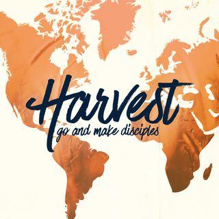 Harvest Stills