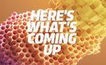 Beehive News (91487)