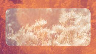 Sage Orange : Motion 1