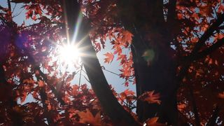 Falling Leaf