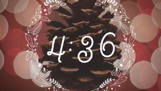 Festive Botanical : Countdown2