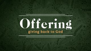 Forest Botanical : Offering