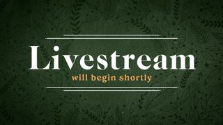 Forest Botanical : Livestream