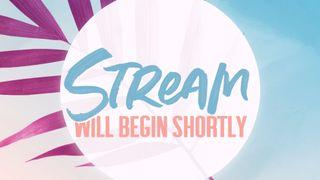 Pink Palm : Stream