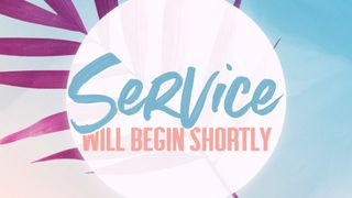 Pink Palm : Service