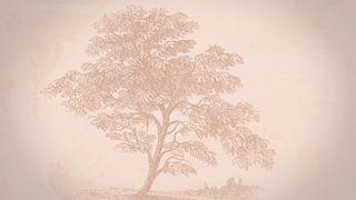 Vintage Tree : Motion 01