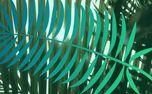 Palm Sunday Stills (95922)