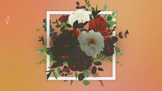 Floral Blank Motion Loop