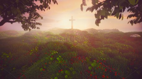 Cross in the morning (96339)