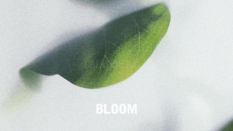 BLOOM (97085)