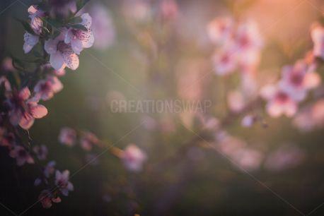 Spring blooms (97429)