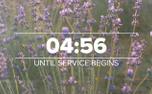 Lavender Countdown (97515)
