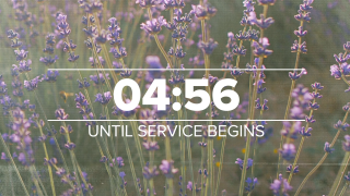 Lavender Countdown