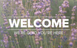 Lavender Welcome (97517)
