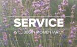 Lavender Service (97520)