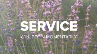 Lavender Service
