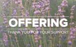 Lavender Offering (97521)