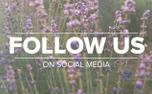 Lavender Social Media (97522)