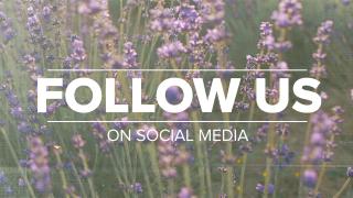 Lavender Social Media