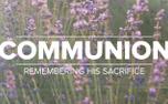 Lavender Communion (97523)